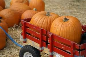 pumpkins wagon